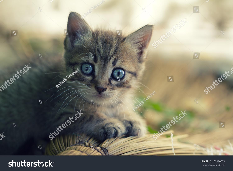 Portrait Adorable Kitten Outdoors Stock Shutterstock