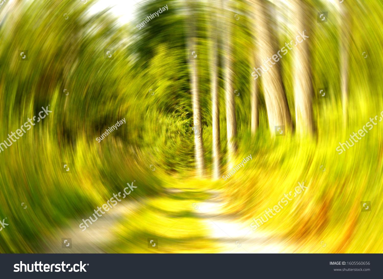 stock-photo-forest-rotating-vertigo-view