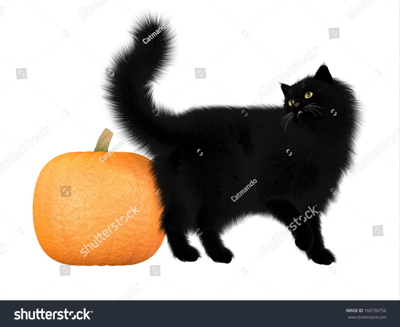 Royalty Free Stock Illustration Of Halloween Black Cat Pumpkin Black