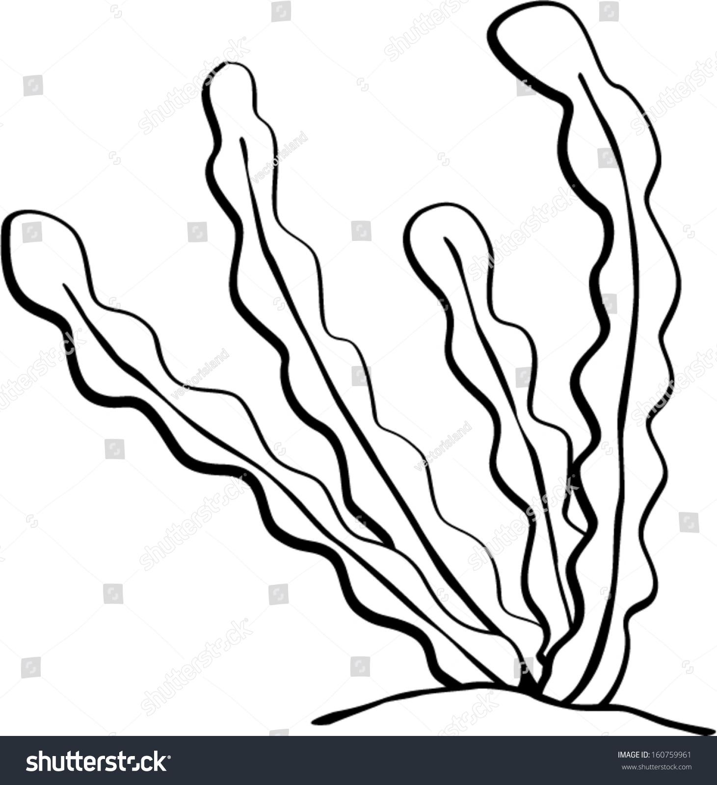 Line Drawing Kelp : Seaweed stock vector shutterstock