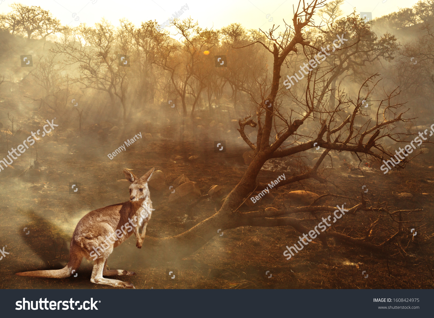 Composition about Australian wildlife in bushfires of Australia in 2020. Kangaroo with fire on background. January 2020 fire affecting Australia is considered the most devastating and deadly ever seen #1608424975