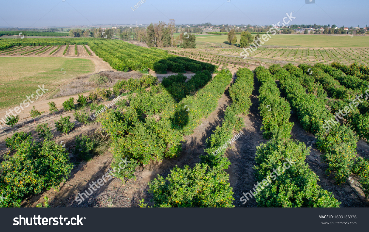 The aerial or bird view on the orchard of orange trees from hot air balloon #1609168336