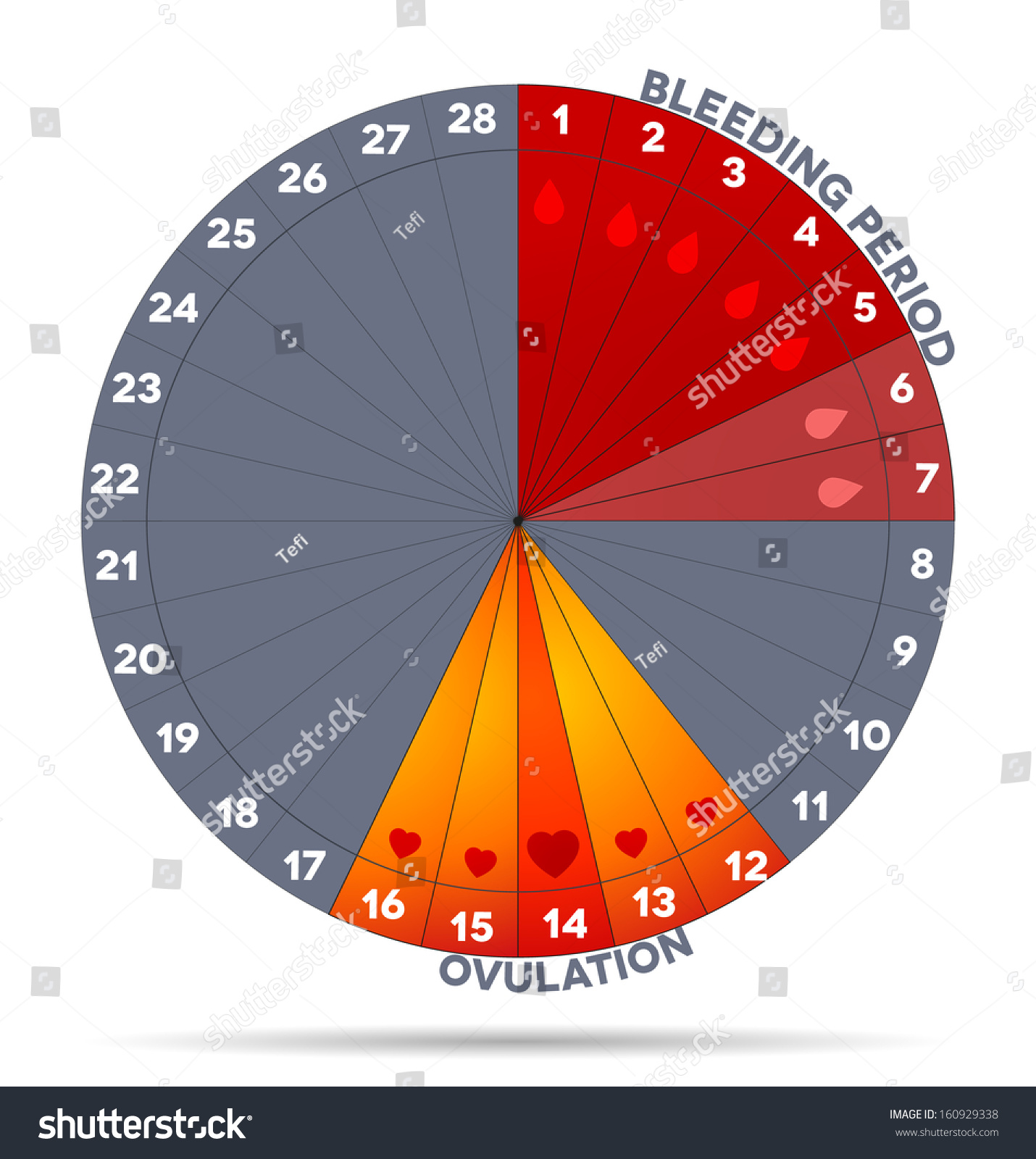 menstrual cycle pie chart: Menstrual cycle graphic average menstrual cycle stock vector