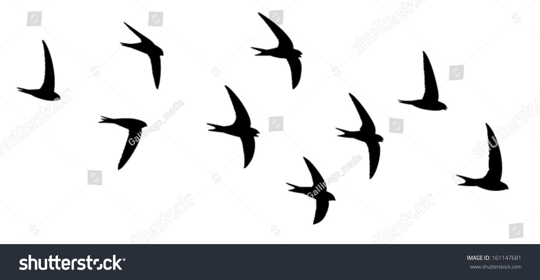 Silhouette Birds Flight Screaming Party Swifts Stock ...