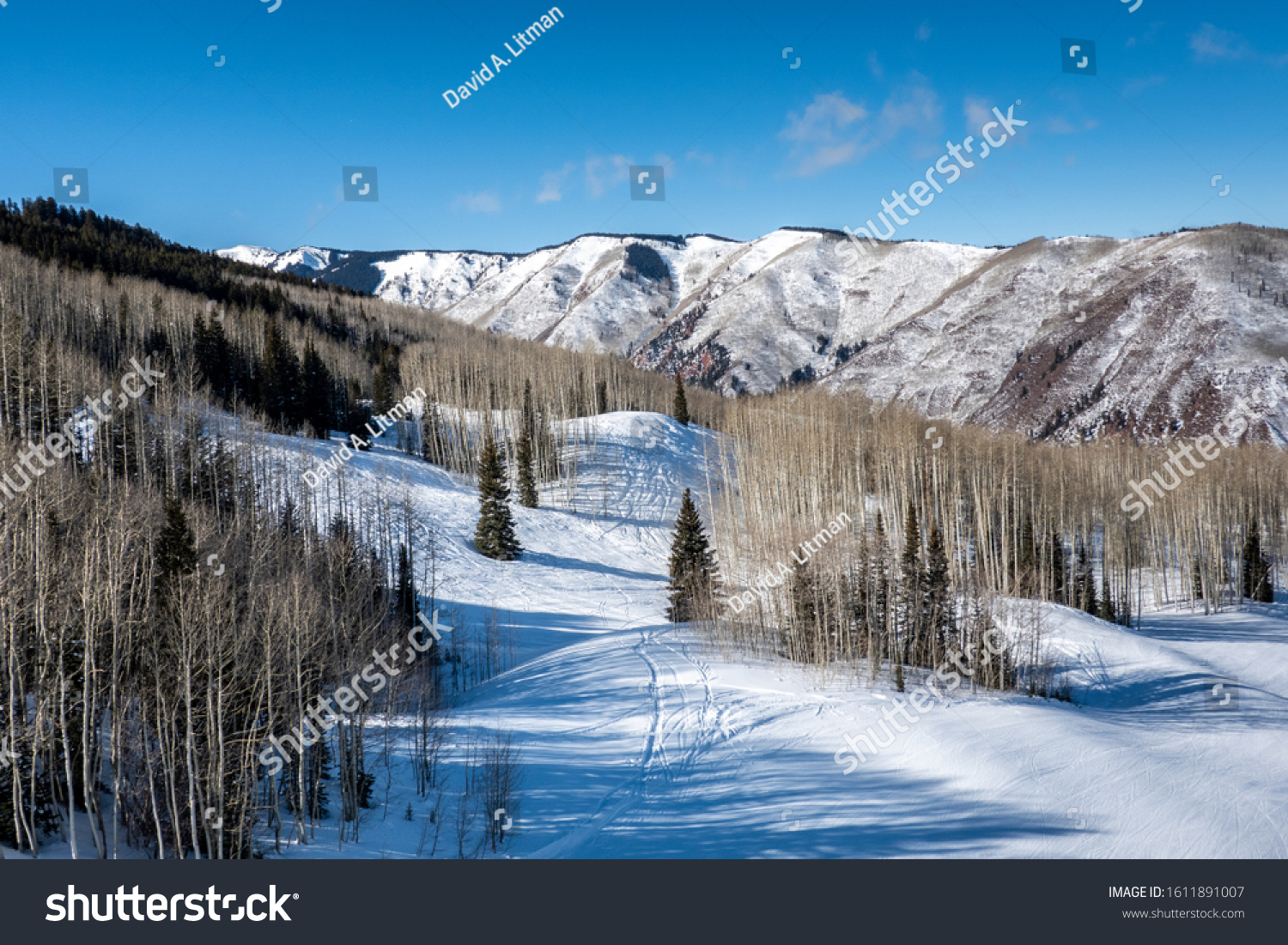 Aspen trees and Pine trees line the slopes at the Aspen Snowmass ski resort, in Snowmass village, in the Rocky Mountains of Colorado.