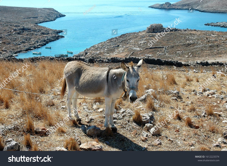 stock-photo-a-donkey-in-a-field-near-a-g