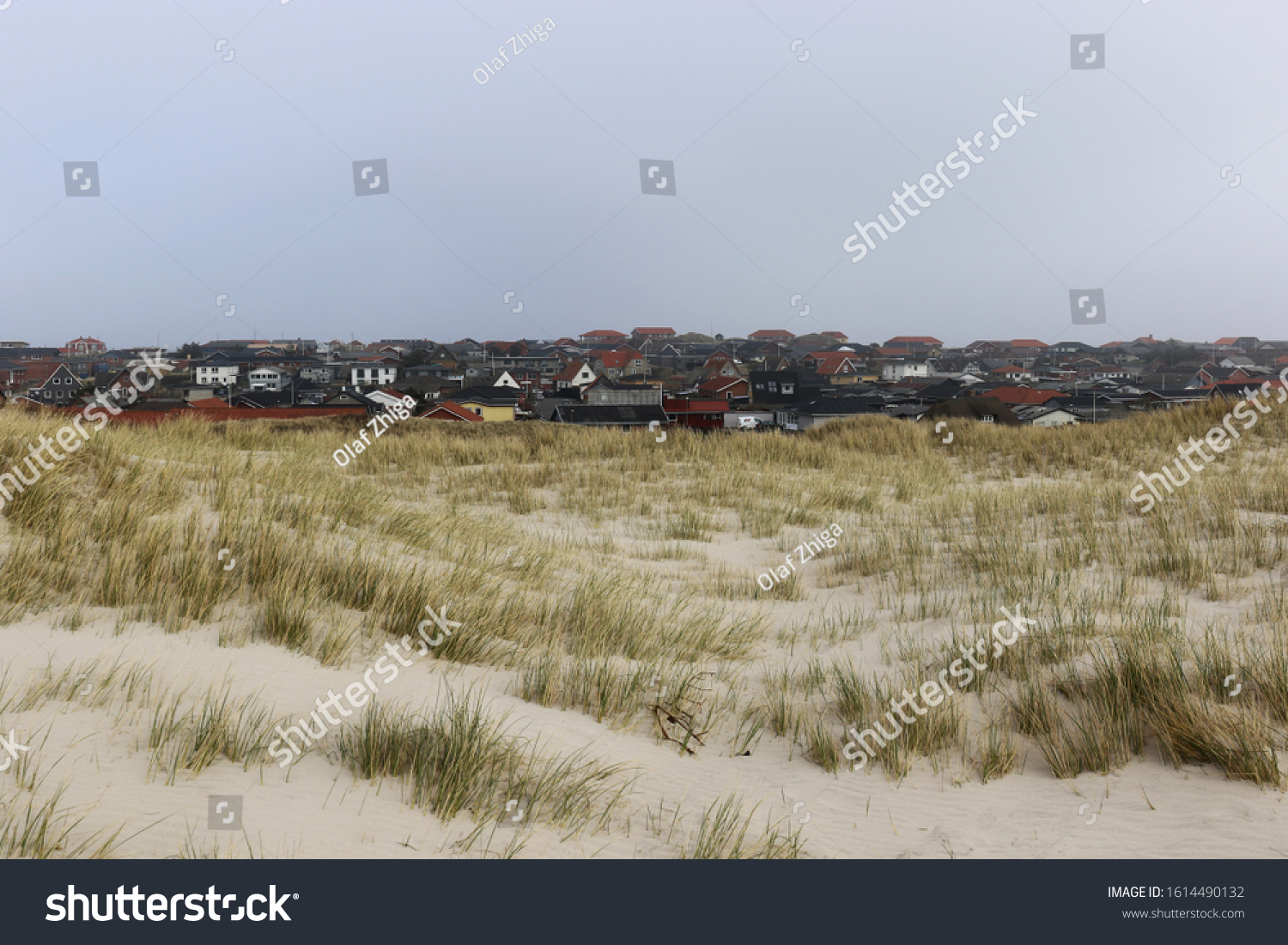 Rack of Danish summer houses appear sinking between  the cold skies and wild windy grass #1614490132