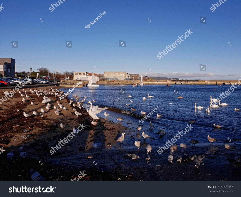 stock-photo-bray-co-wicklow-ireland-janu