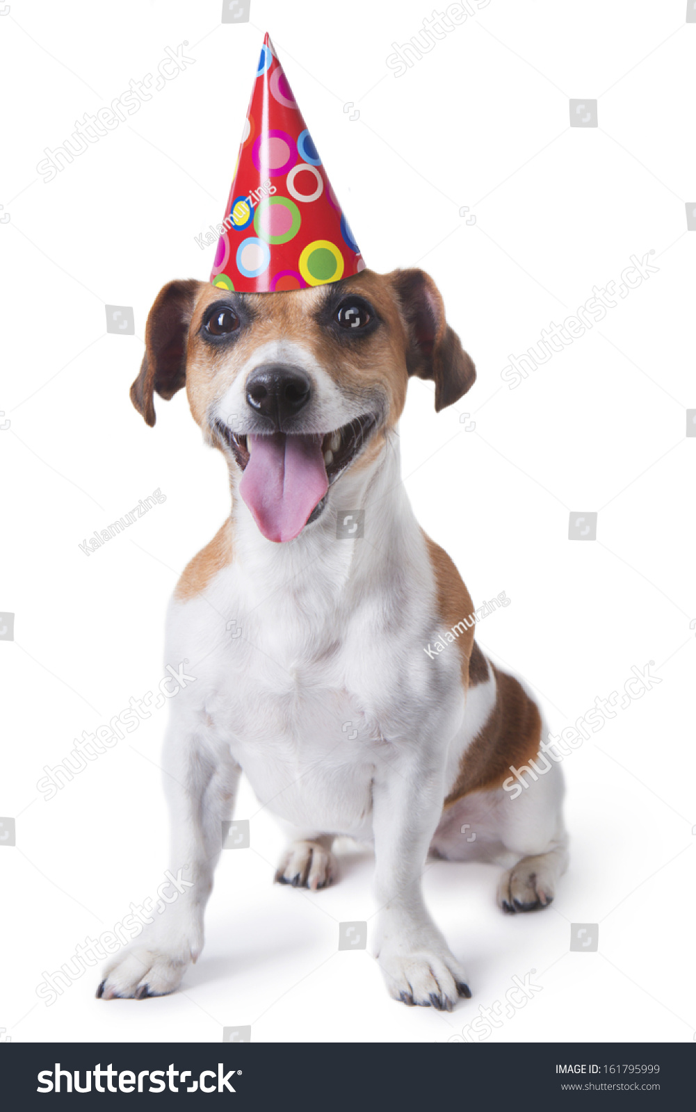 Cute Dog In Red Party Hat Designed Colored Circles Smiling Wishes Happy Birthday White Background