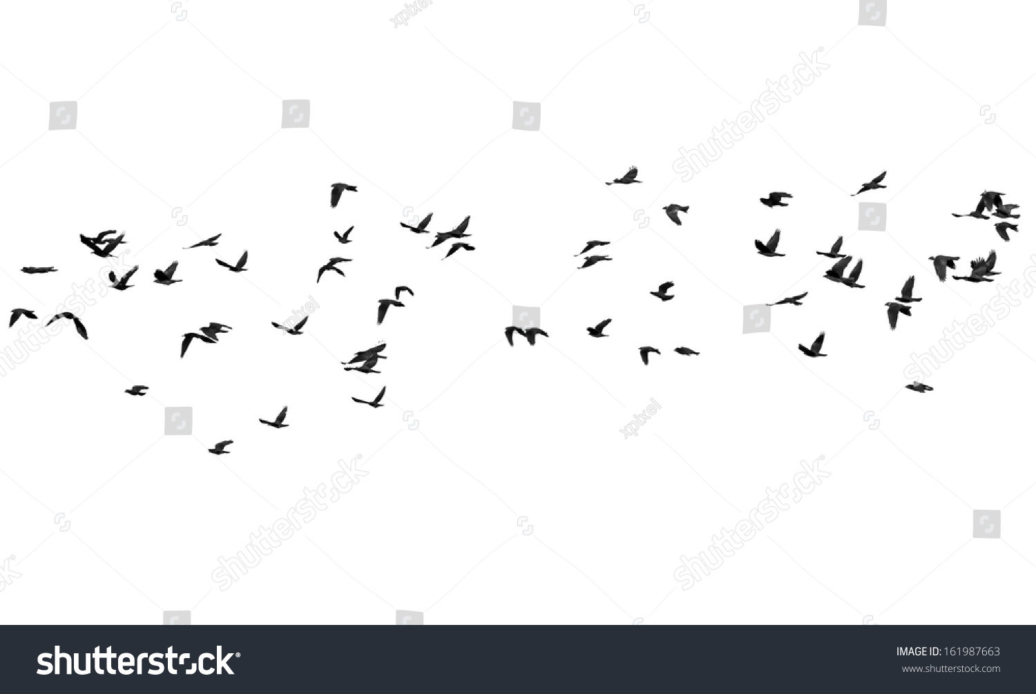 Flock Birds Isolated On White Background Stock Photo 161987663