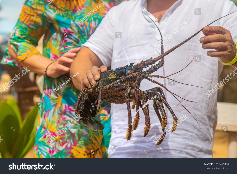 Live Big Lobster Hands People Selective ...