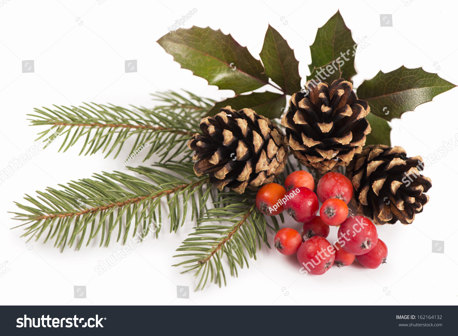 Branches Of Holly, Pine Cones, Mountain Ash Berries Stock