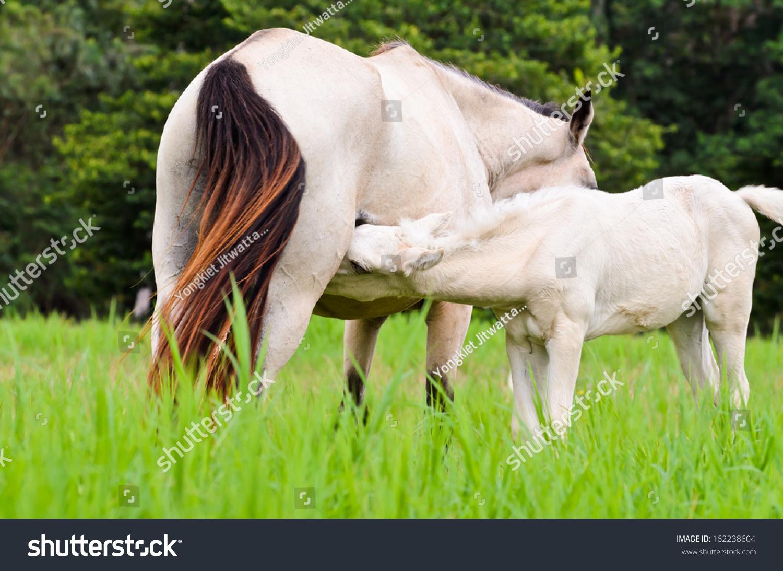 Animal Beautiful Nature White Baby Horse Stock Photo Edit Now 162238604