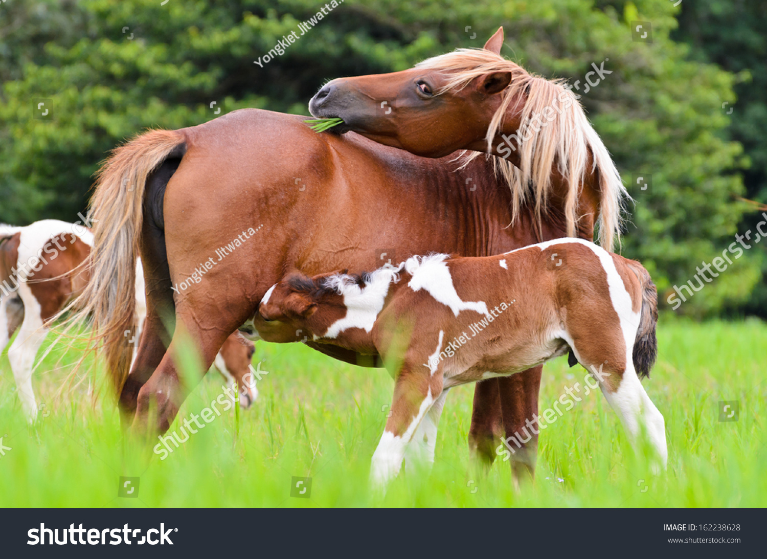 Animal Beautiful Nature Brown Baby Horse Stock Photo Edit Now 162238628