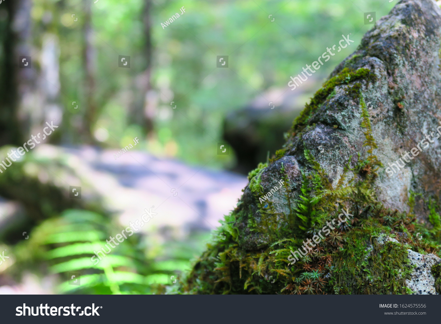 stock-photo-closeup-of-a-rock-covered-wi
