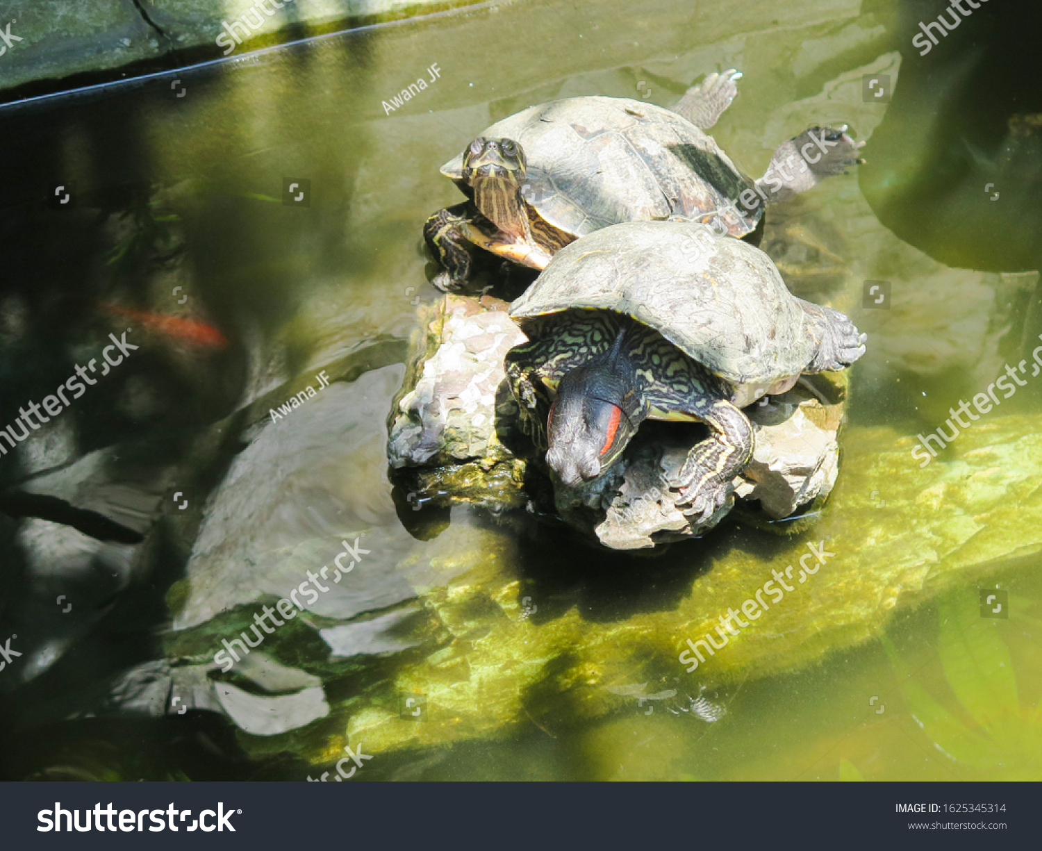 stock-photo-two-turtles-standing-on-a-st