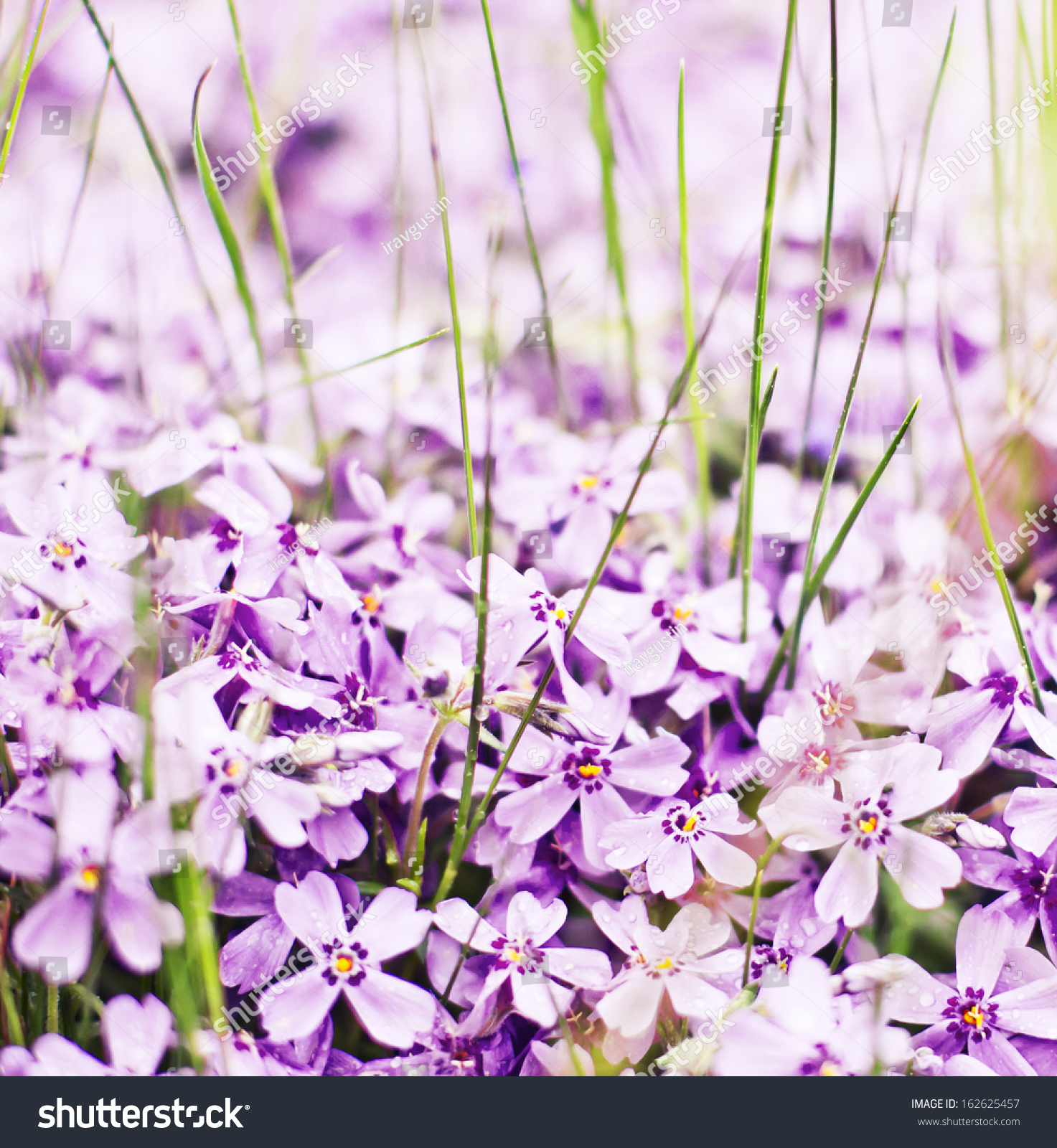 Beautiful Spring Flower Background Spring Background Stock Photo