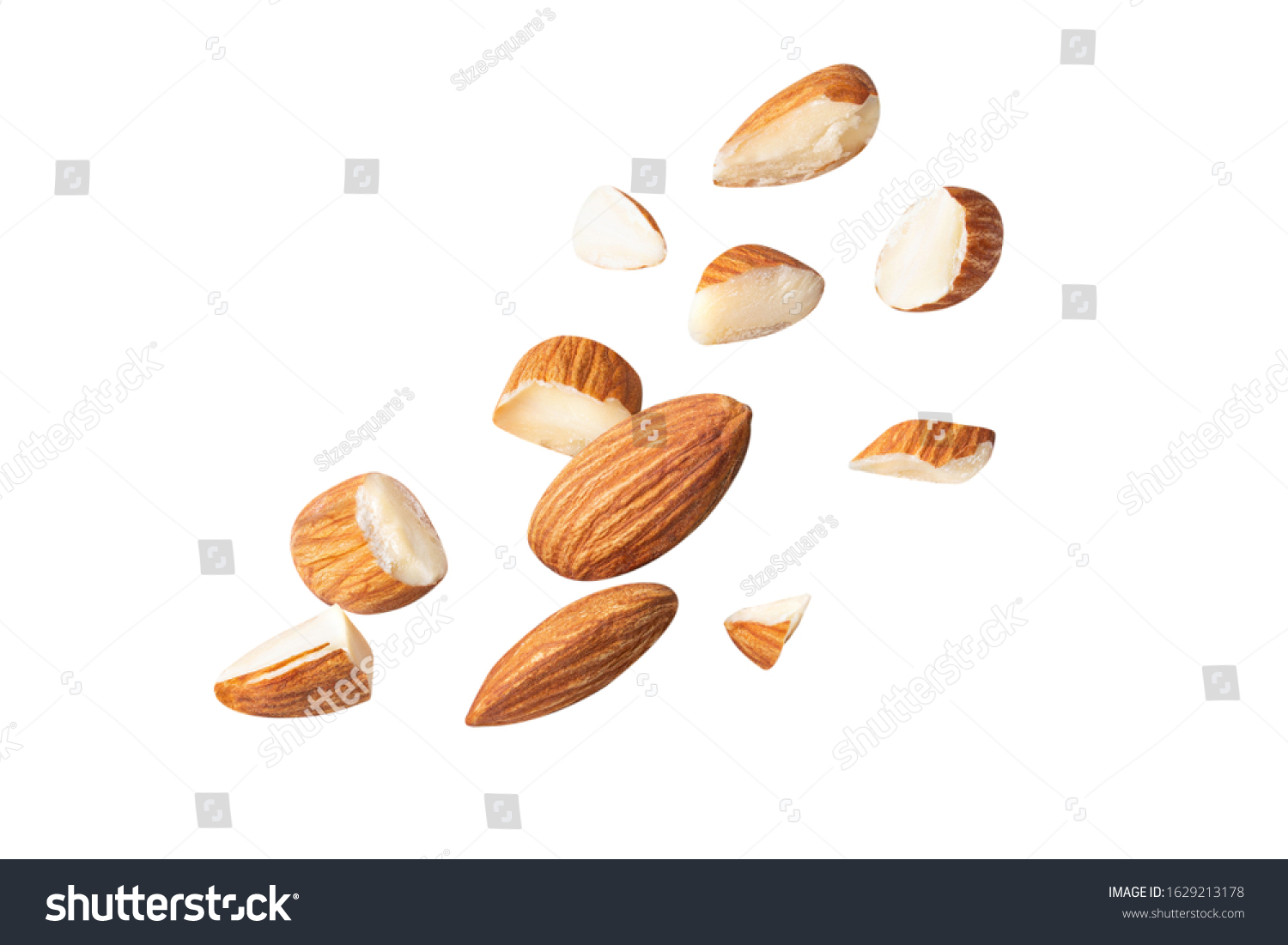 full almond fly on white isolated with clipping path #1629213178
