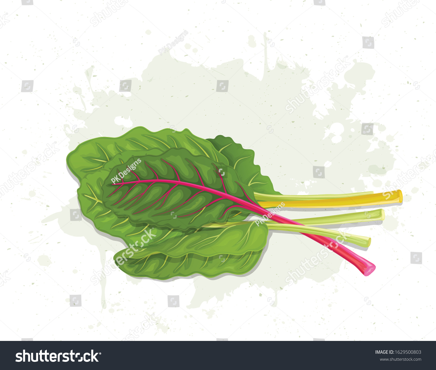 Swiss Chard Vector Illustration On White Stock Vector Royalty Free 1629500803