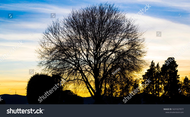 stock-photo-dramatic-shot-of-tree-sillou