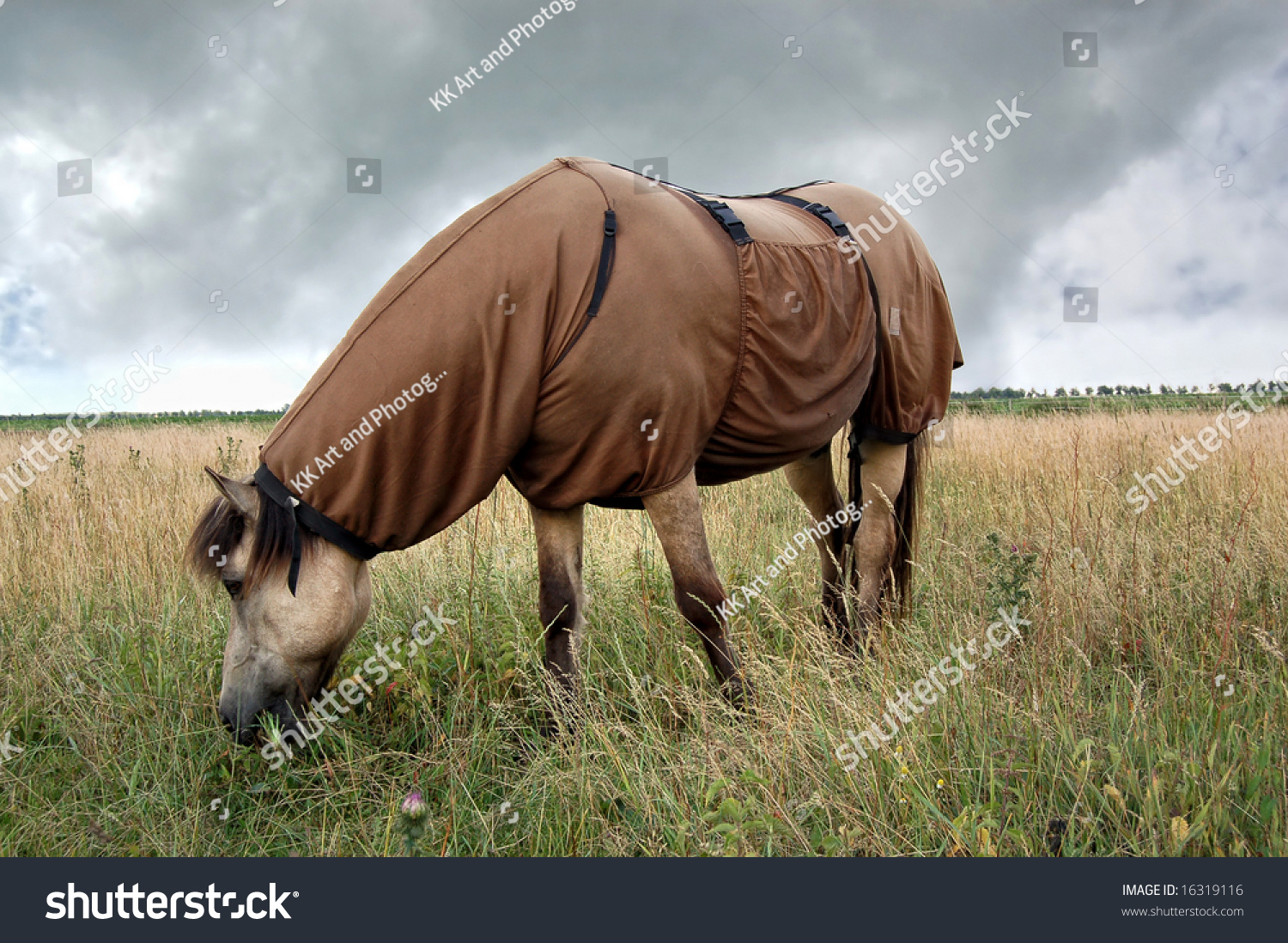 Horse Wearing Sweet Itch Blanket Preventing Stock Photo