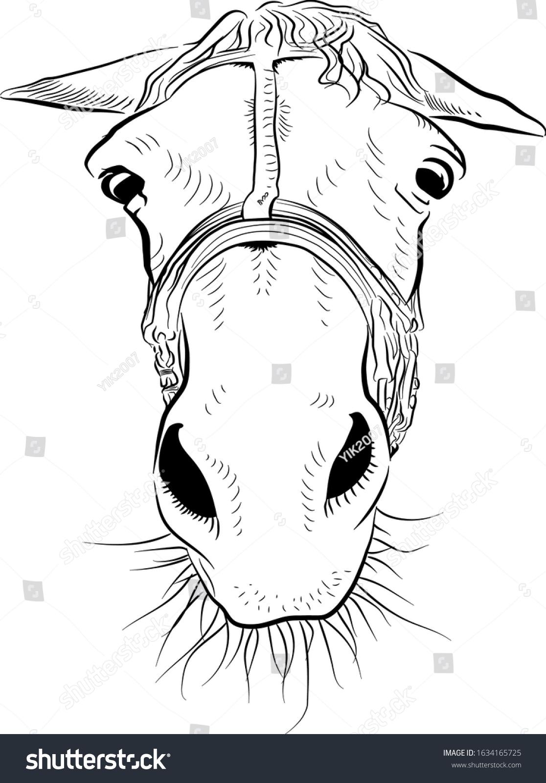 Vector De Stock Libre De Regalias Sobre Horse Head Sketch Art Sad Emotion1634165725