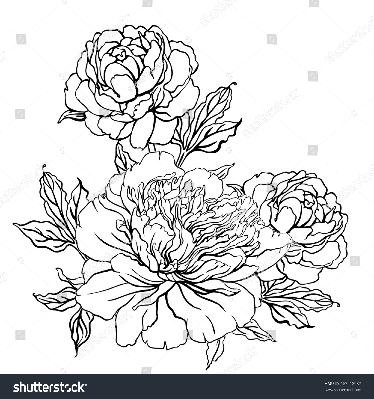 Peony Vintage Handdrawing Background Flowers Vector Stock