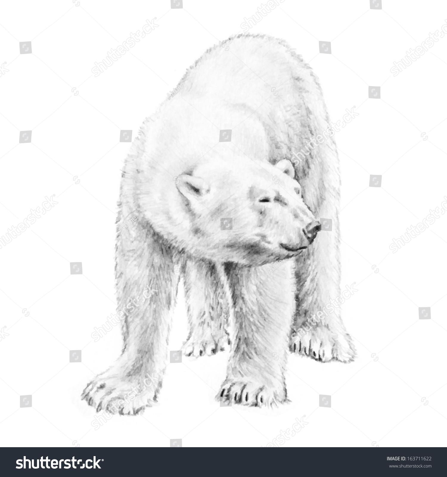 shaggy white polar bear vector drawing stock vector 163711622