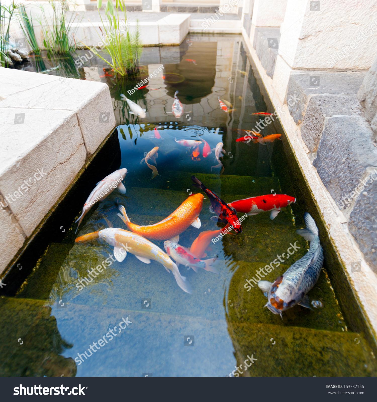 Koi pond japan colorful carps stock photo 163732166 for Koi show pools