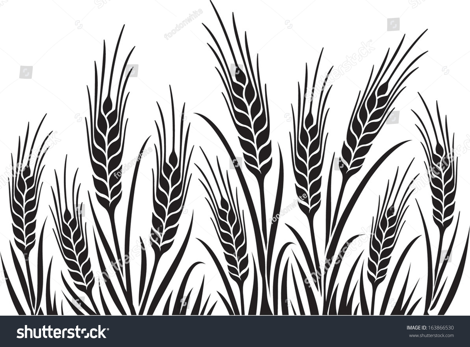 Field Wheat Barley Rye Vector Visual Stock Vector ...