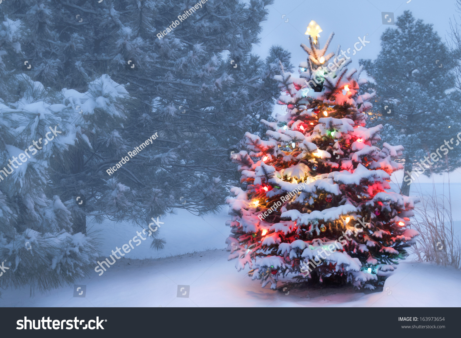 this decorated outdoor snow covered christmas tree glows. Black Bedroom Furniture Sets. Home Design Ideas
