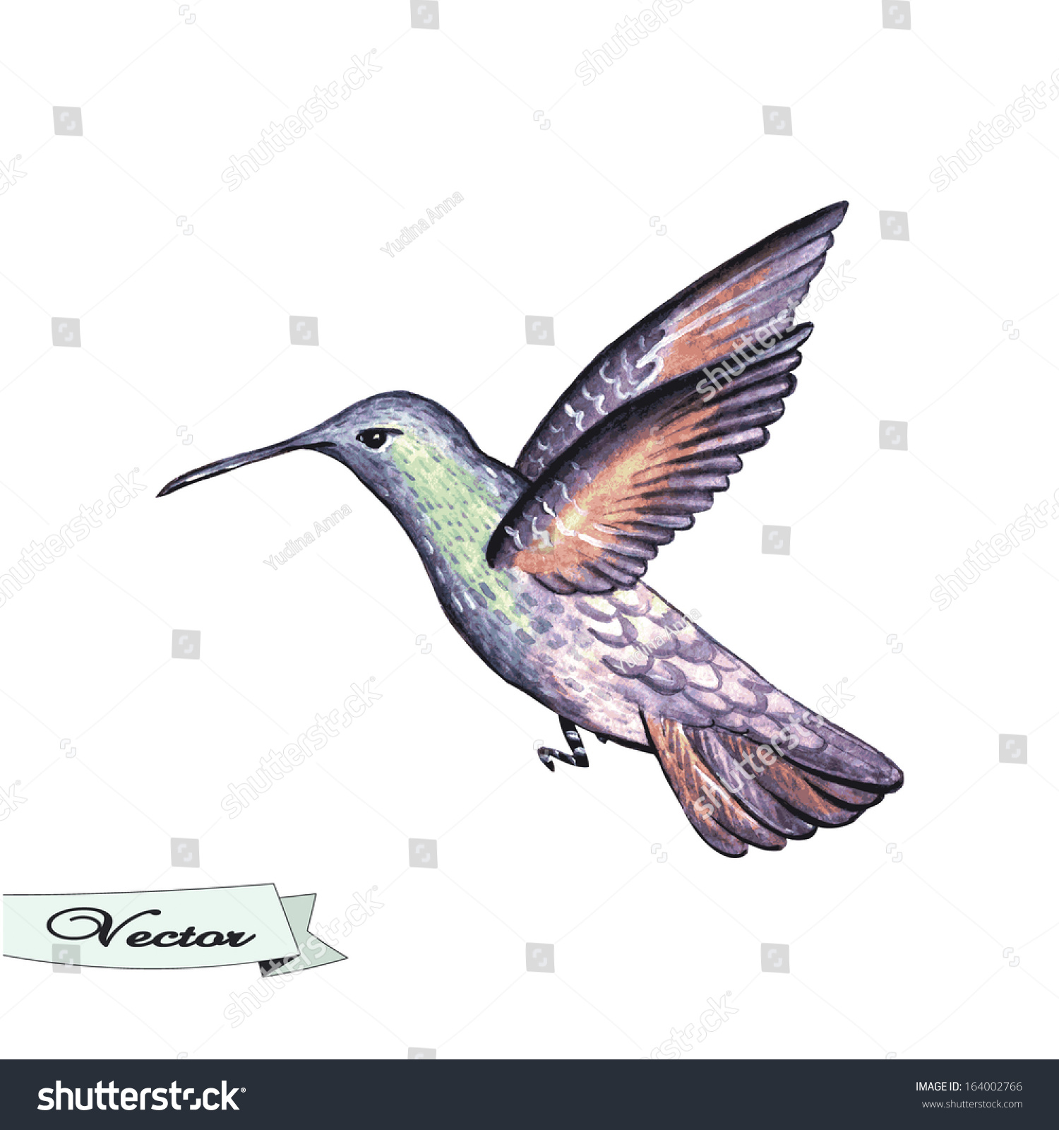 Vector watercolor hummingbird vector illustration for greeting id 164002766 m4hsunfo
