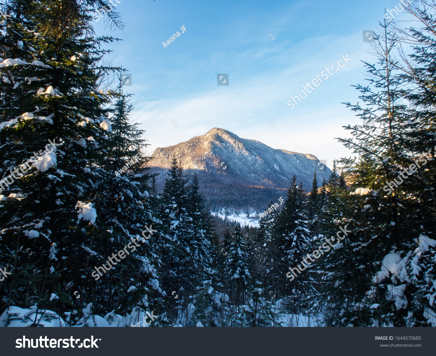 Beautiful winter view of a mountain with pine trees in the foreground at the Jacques Cartier national park, in Quebec, Canada