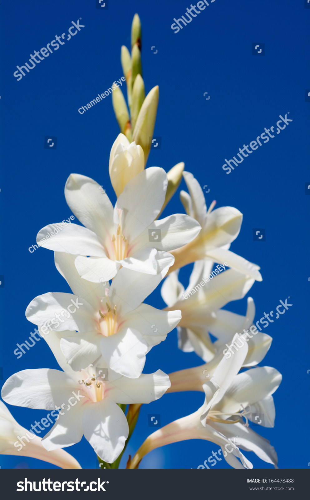 White Artificial Lilly Flower On The Blue Background Ez Canvas