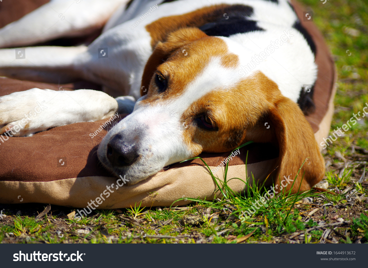 Dog relaxing on a pillow outdoors