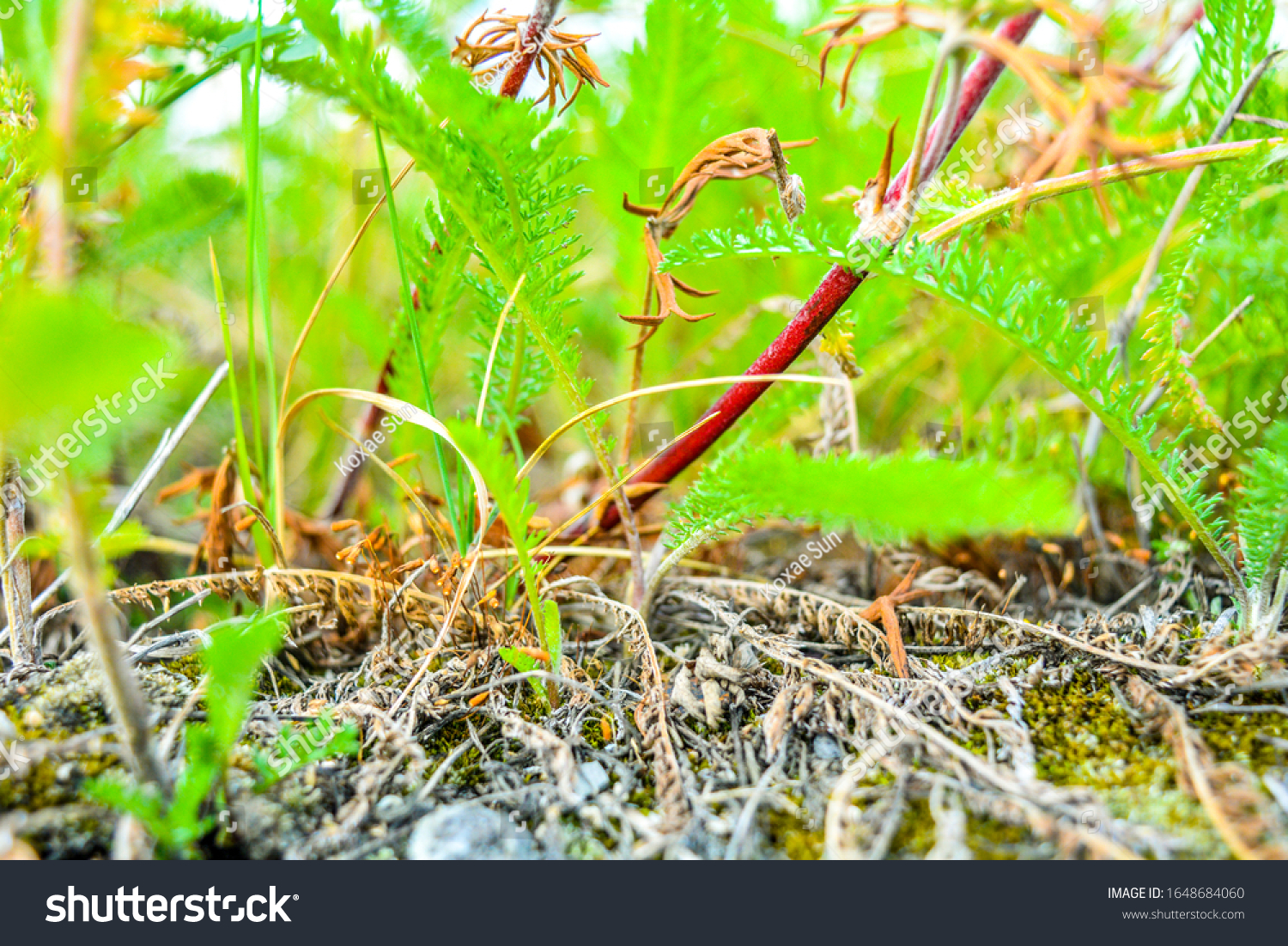 Closeup Orange Seed Capsules Ordinary Moss Stock Image Download Now