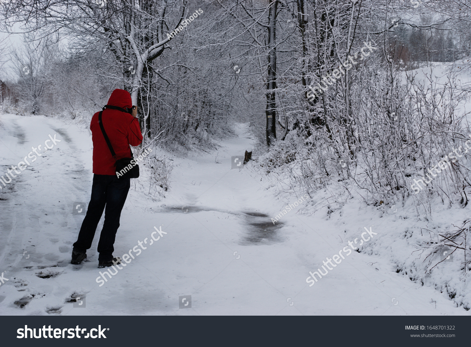 stock-photo-forest-snowy-road-snow-cover