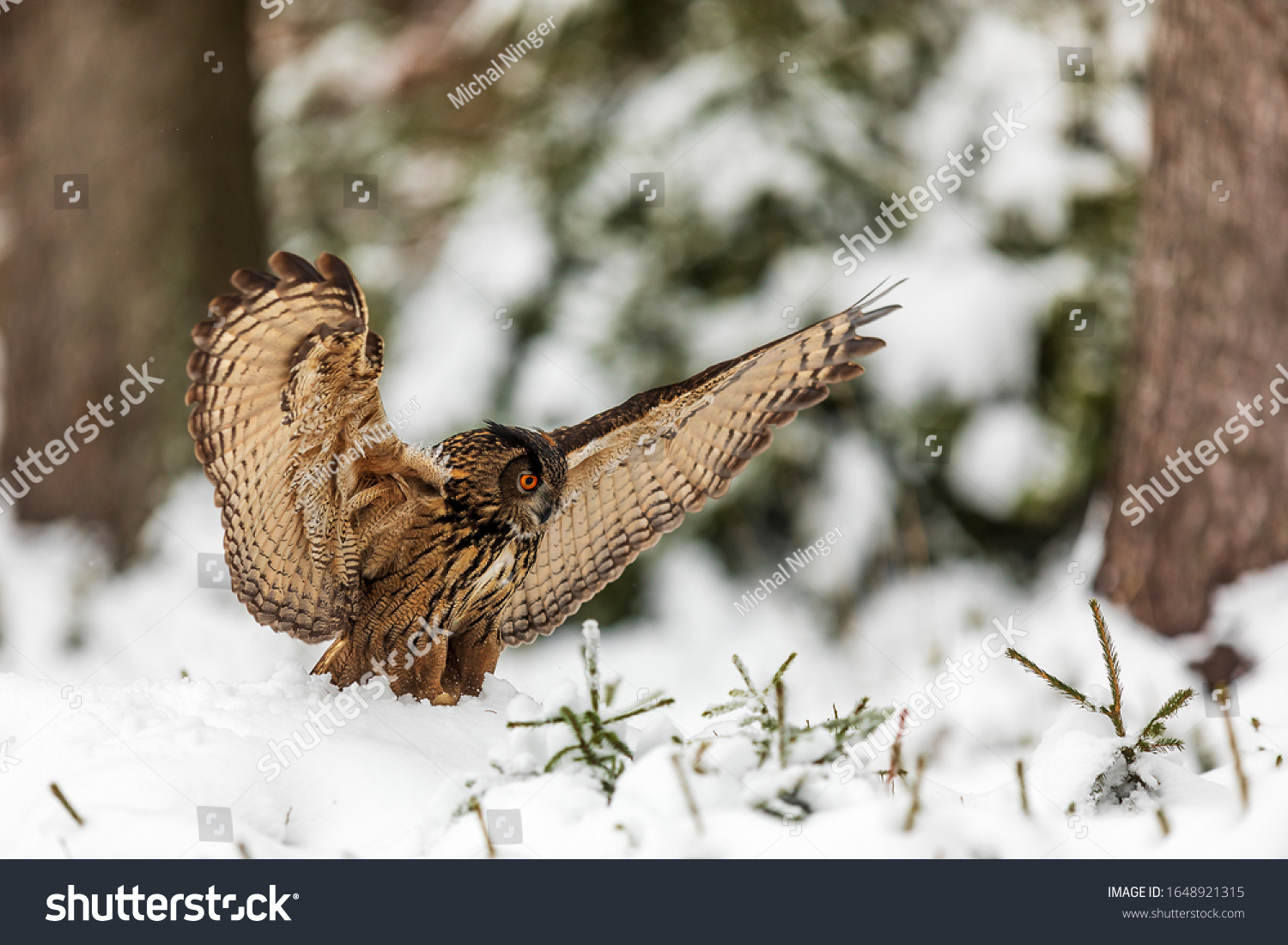 stock-photo-eurasian-eagle-owl-bubo-bubo