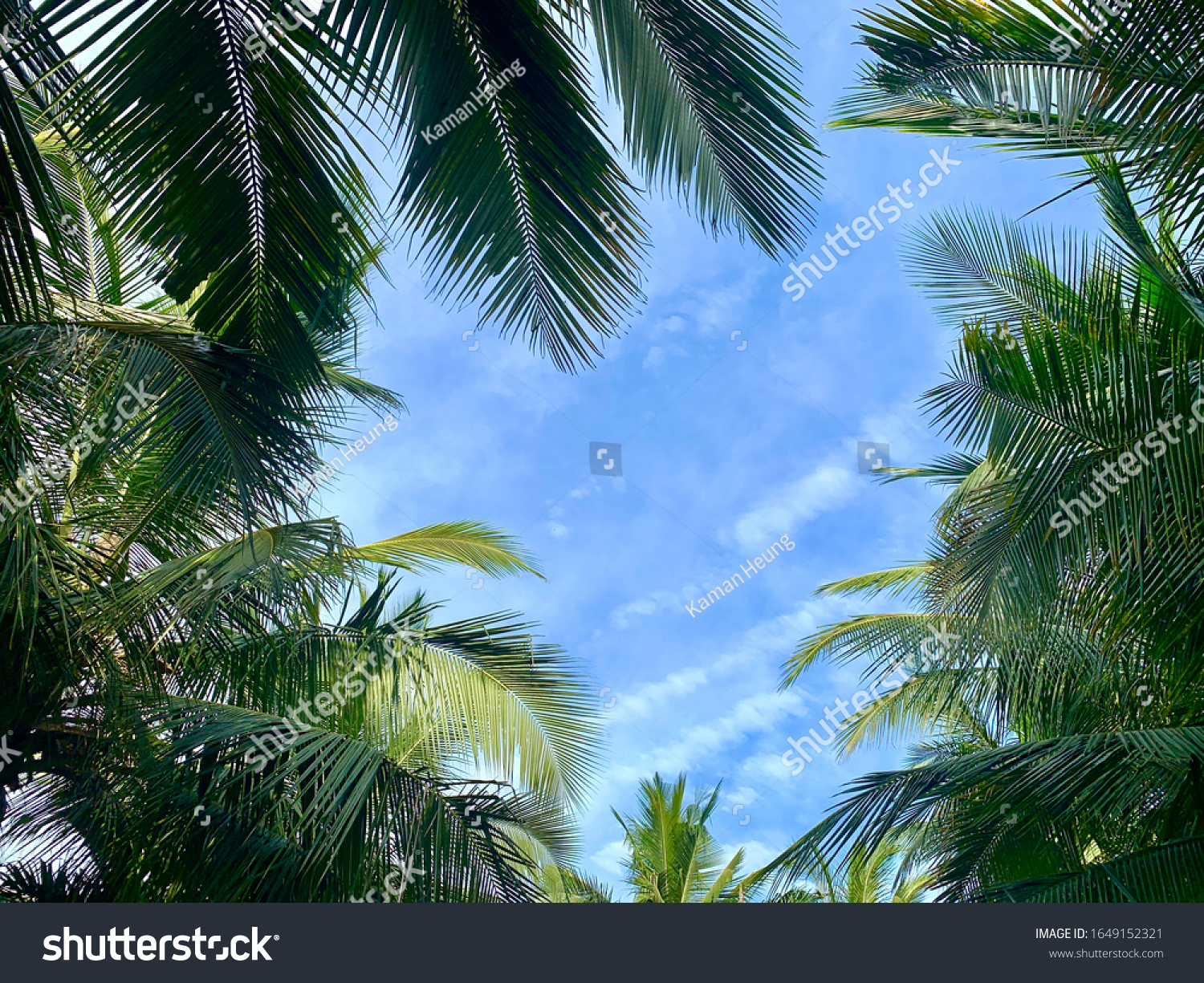 Palm Tree Background Blue Sky Summer Stock Photo Edit Now 1649152321