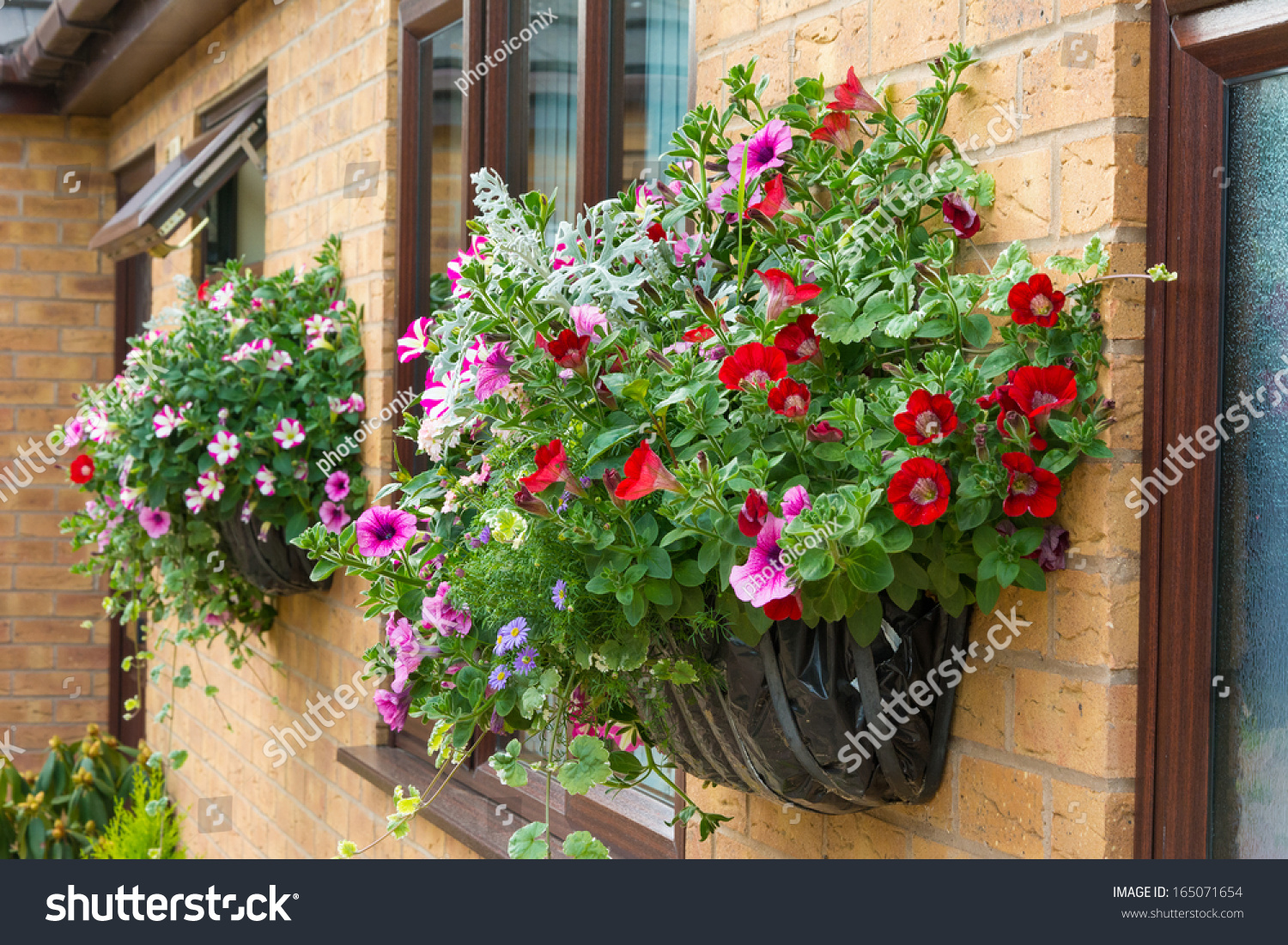 Range Flower Baskets : Wall mounted hanging baskets with a range of summer