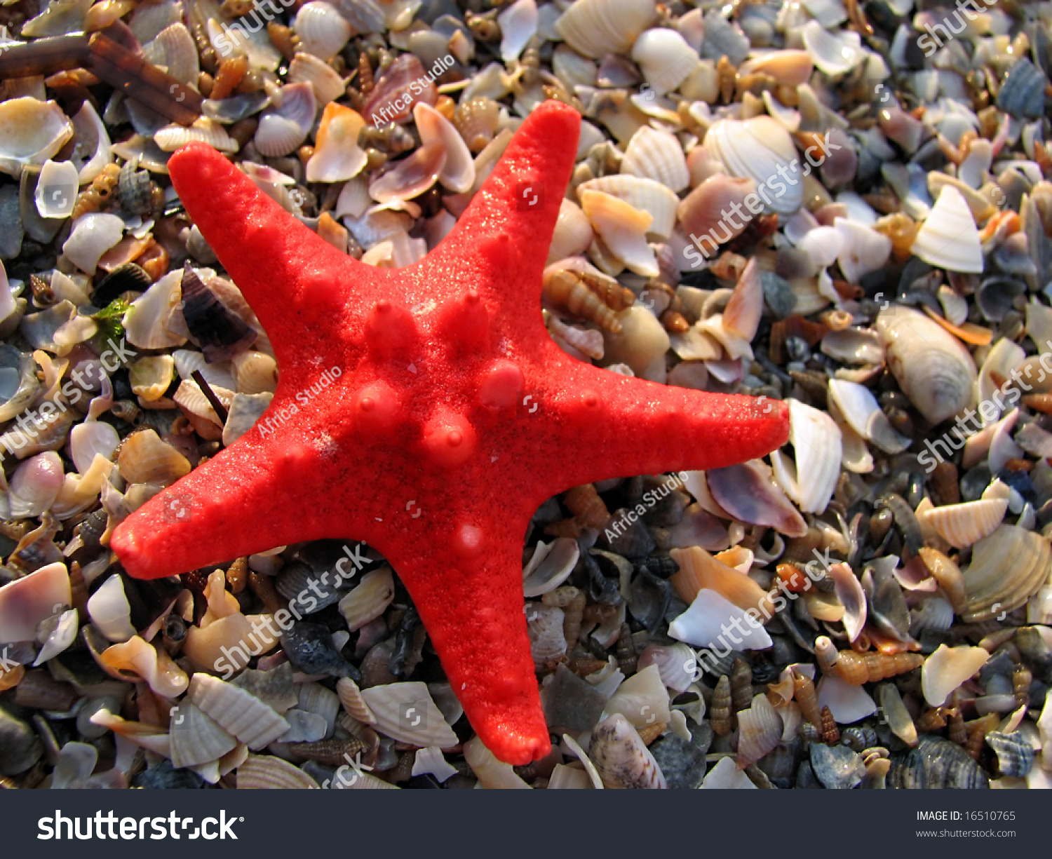 how to find starfish on the beach