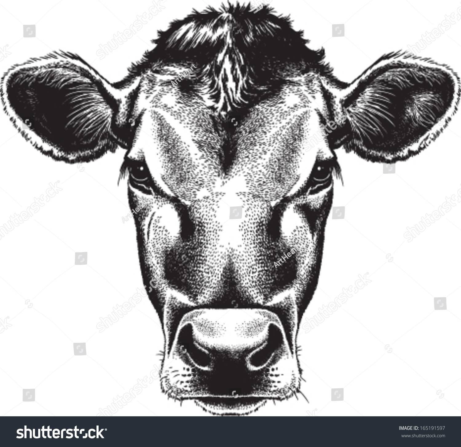 Line Drawing Cow Face : Online image photo editor shutterstock