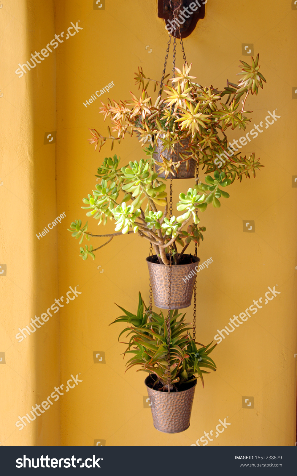 Succulents Hanging Pots Yellow Background Stock Photo Edit Now 1652238679