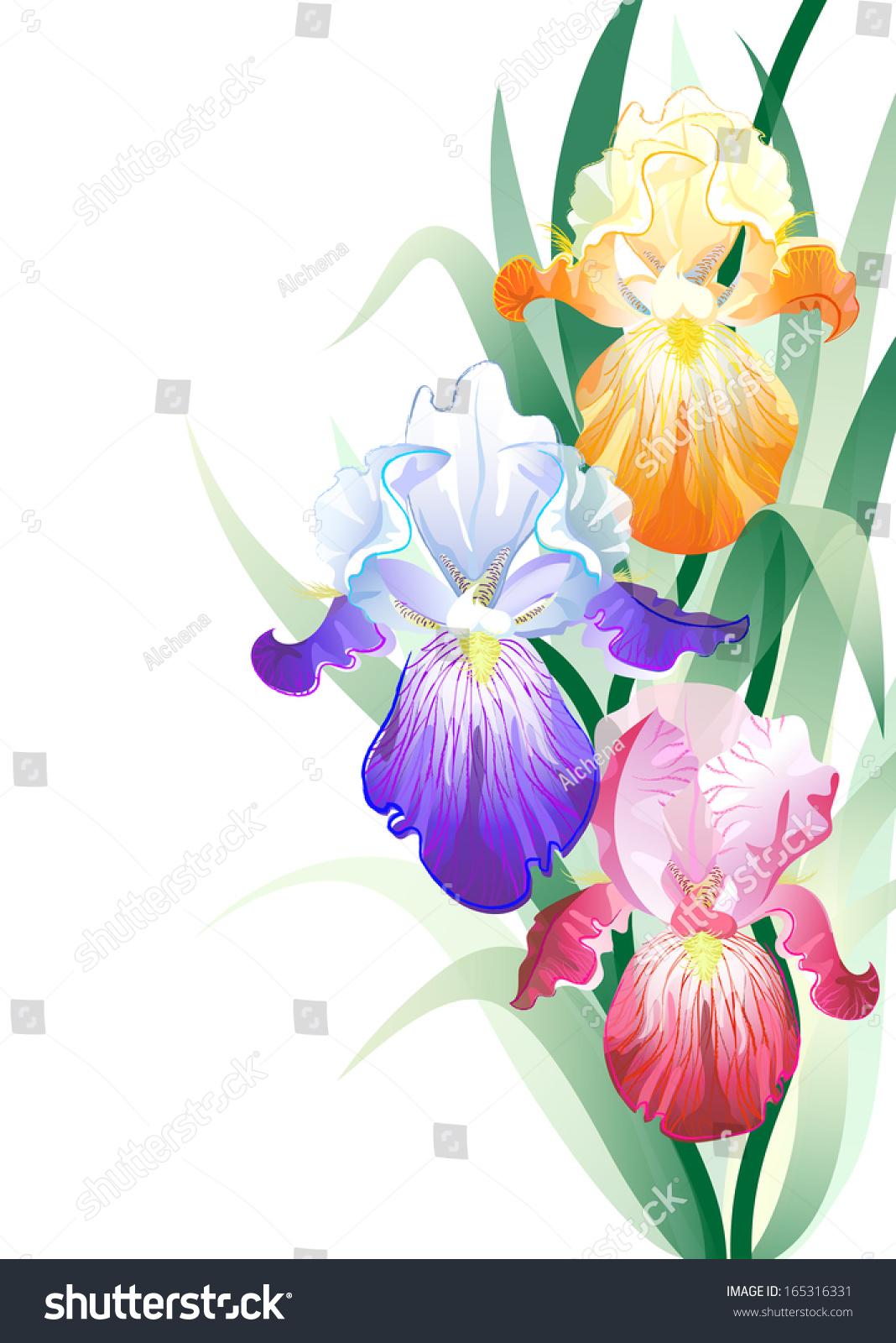 Vector holidays card iris flowers bouquet stock vector royalty free vector holidays card with iris flowers bouquet izmirmasajfo
