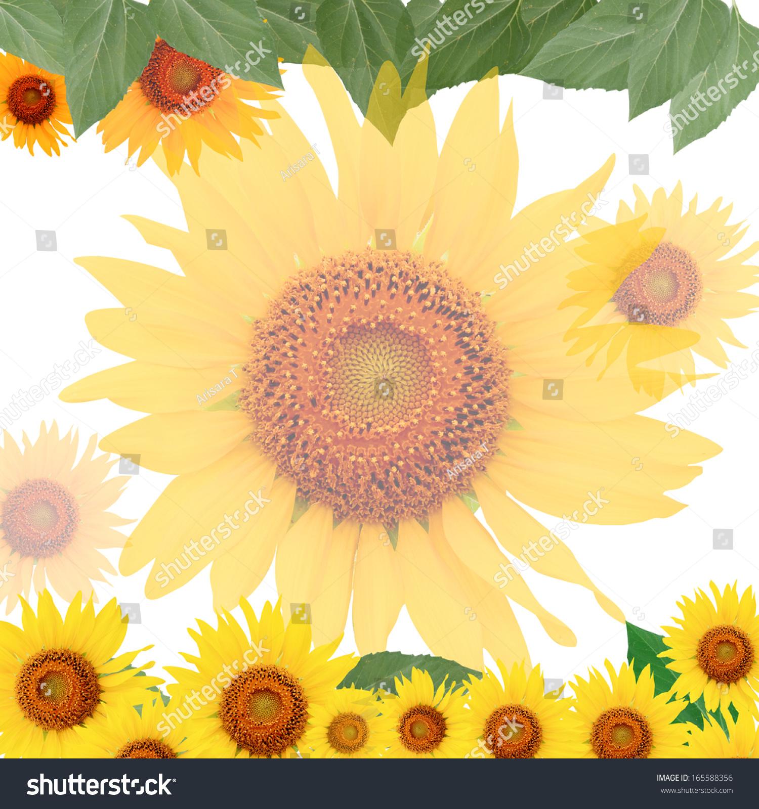 Outstanding Sunflower Frame Gallery - Framed Art Ideas ...