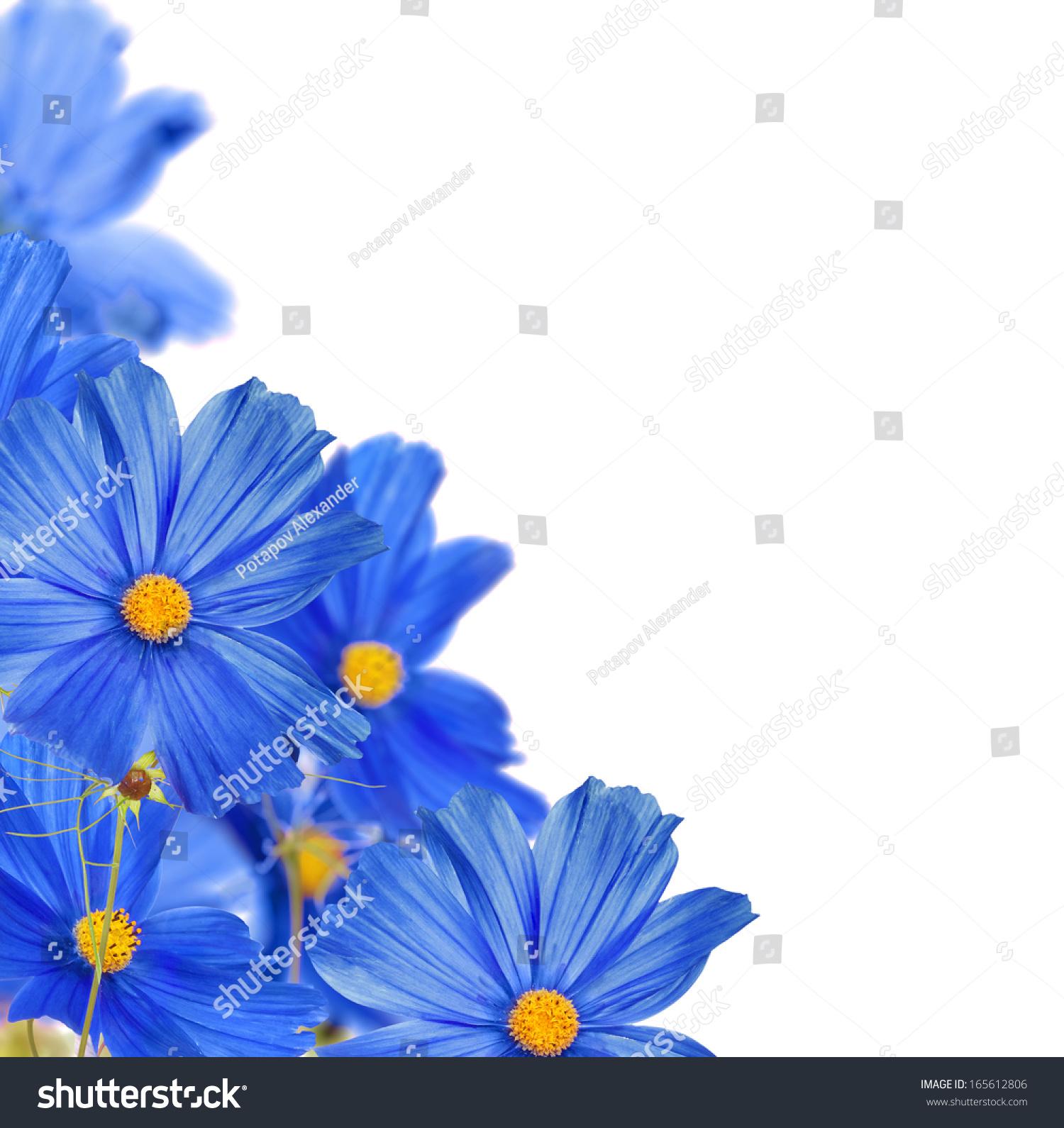 Large blue flowers corner isolated on stock photo royalty free large blue flowers corner isolated on white background izmirmasajfo
