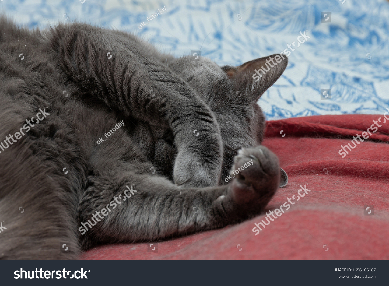 stock-photo-gray-cat-sleeps-sleeps-cover