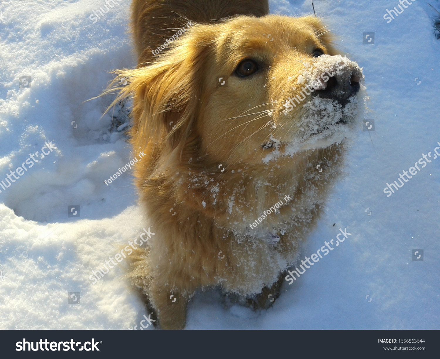 stock-photo-dog-is-fed-up-with-snowflake