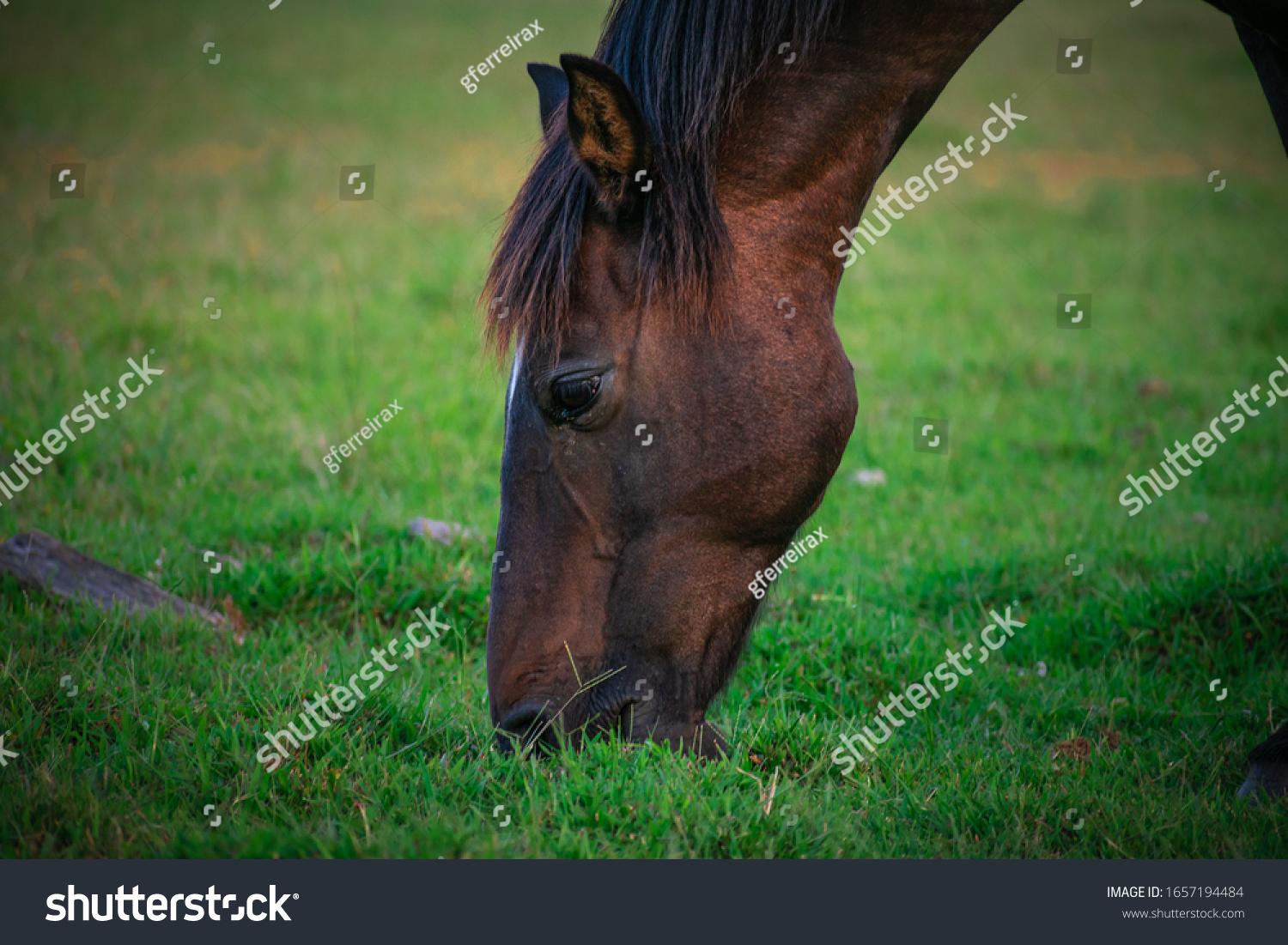 stock-photo-a-brown-horse-in-nature-1657