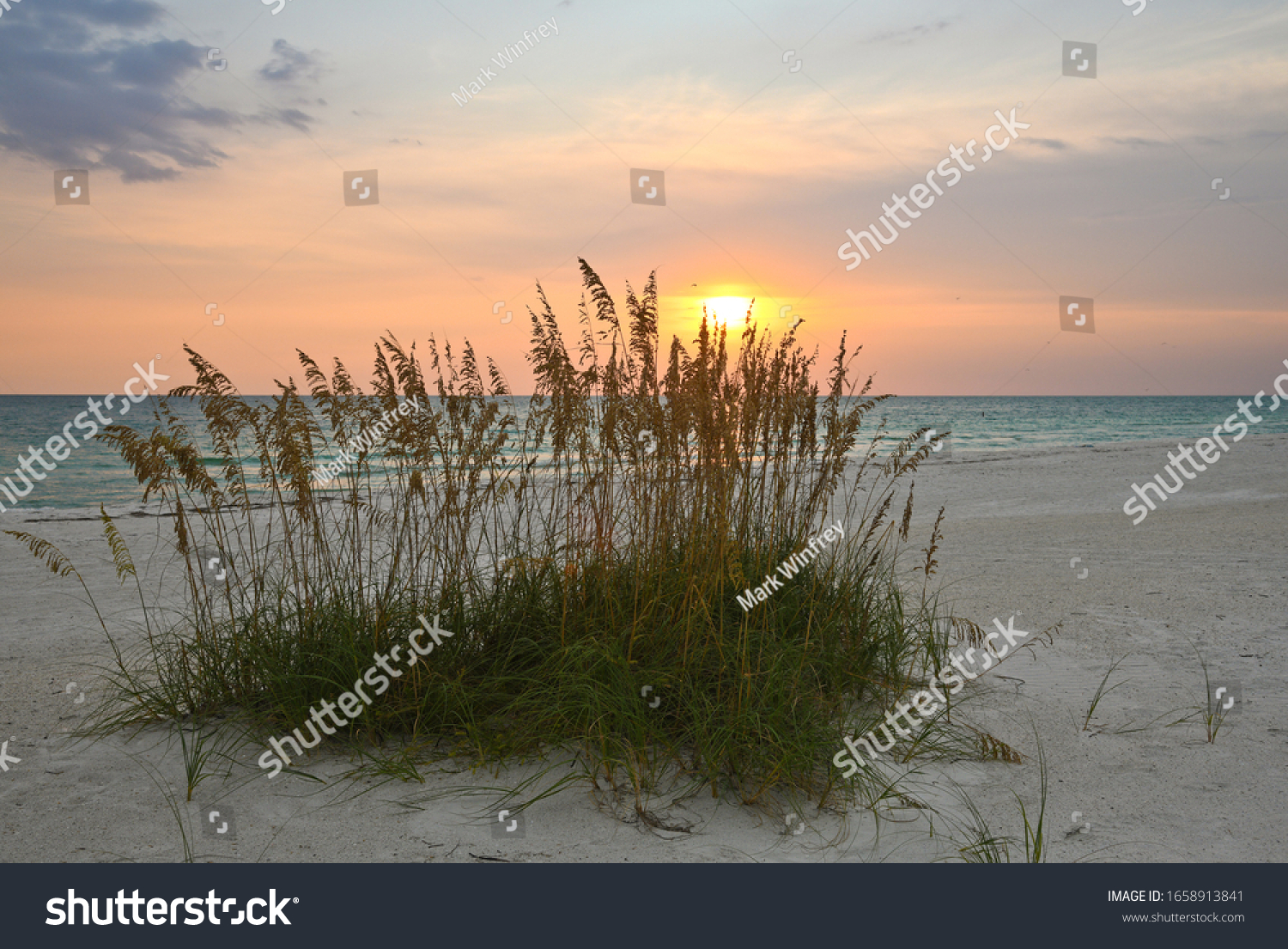 stock-photo-sea-oats-on-beach-of-the-gul